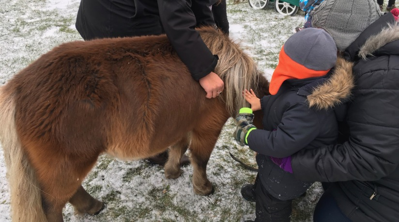 Horse Therapy atCPE